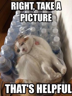 internet memes, best memes, best internet memes, cats of instagram, cats on the internet,