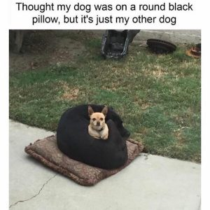 cute funny dog sitting on dog meme
