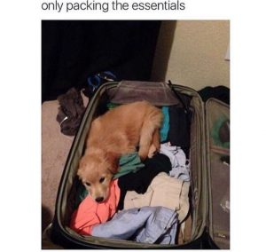 dog in luggage meme